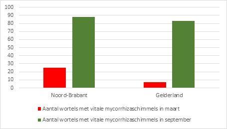 Fig. 2. Aantal wortels met vitale mycorrhizaschimmels rondom en in wortels van zuileiken op boomkwekerijen in Noord-Brabant en Gelderland in maart en september