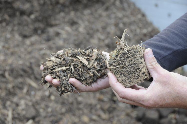 Biomassacentrale. De kassen worden gestookt met een eigen biomassacentrale. Die loopt allereerst op oud substraat, maar ook op afgekeurde planten. Die worden dan gemengd met houtsnippers.