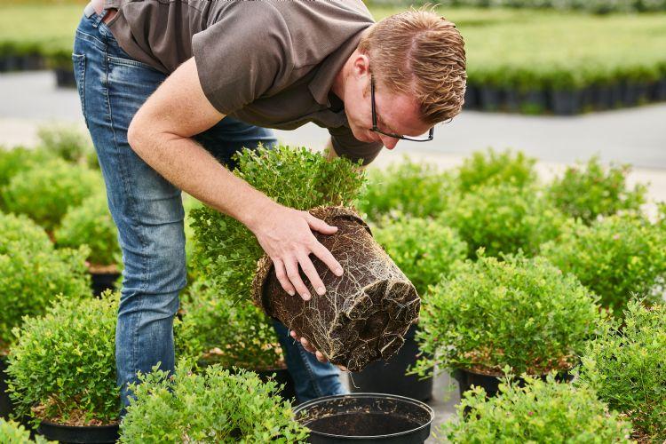 Stefan Even, teeltadviseur bij Plant Health Cure