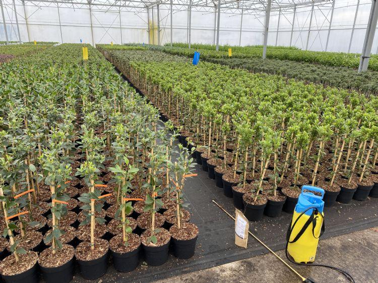 Demo inzet van Mycordip Universeel, voor het testen van mycorrhiza in containerteelt