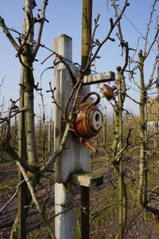 Van de Elzen heeft zo'n 100 nestkasten in en rond zijn boomgaard opgehangen, waarvan enkele met een bijzonder design. Behalve veel mezenkasten zijn er ook kasten voor torenvalken, uilen, bonte vliegenvangers, boomkruipers en boomklevers.