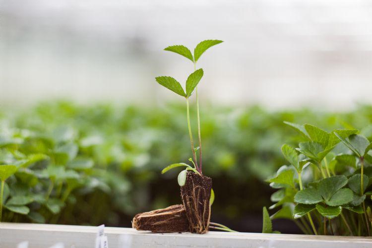 Met de Preforma-plug is de beworteling van de plantjes is uitstekend