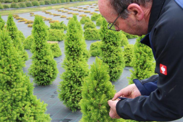 Theo Wenting knipt jaarlijks rond de 20 miljoen stekken