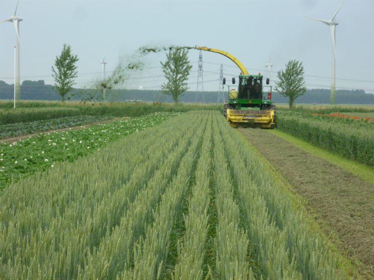 Gemaaid gras op een perceel met strokenteelt wordt direct elders uitgestrooid. Foto: Fogelina Cuperus
