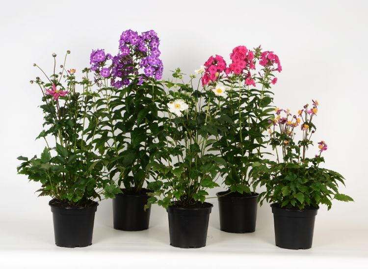 Aldi vaste plantenmix