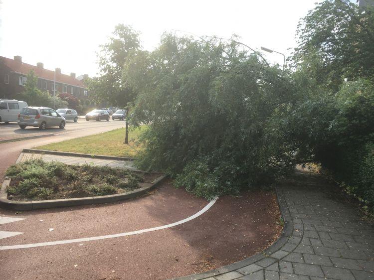 Een omgewaaide boom in Nijmegen