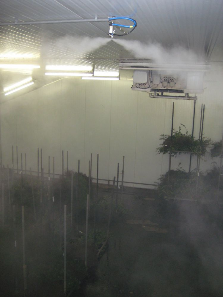 De droge mist uit de Dry Fog zorgt voor voldoende luchtvochtigheid
