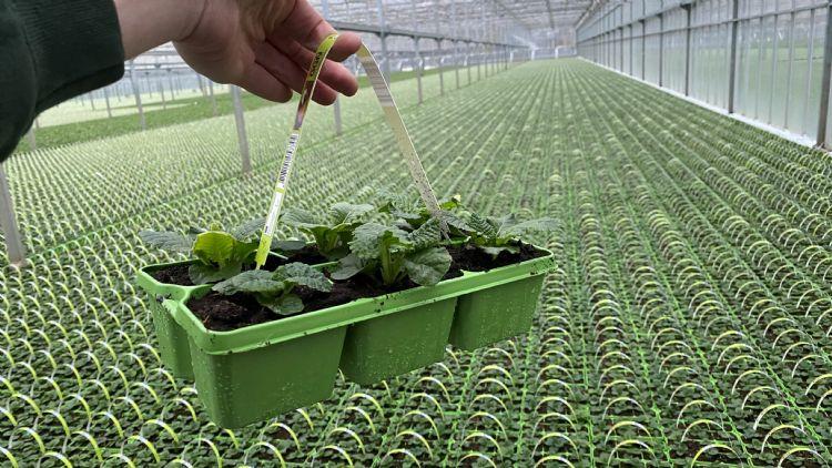 M-plastics is ook leidend op het gebied van eenmalige kweektrays