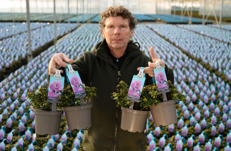 Frans Kortenhorst van boomkwekerij Kortenhorst is gespecialiseerd in dwergrododendrons