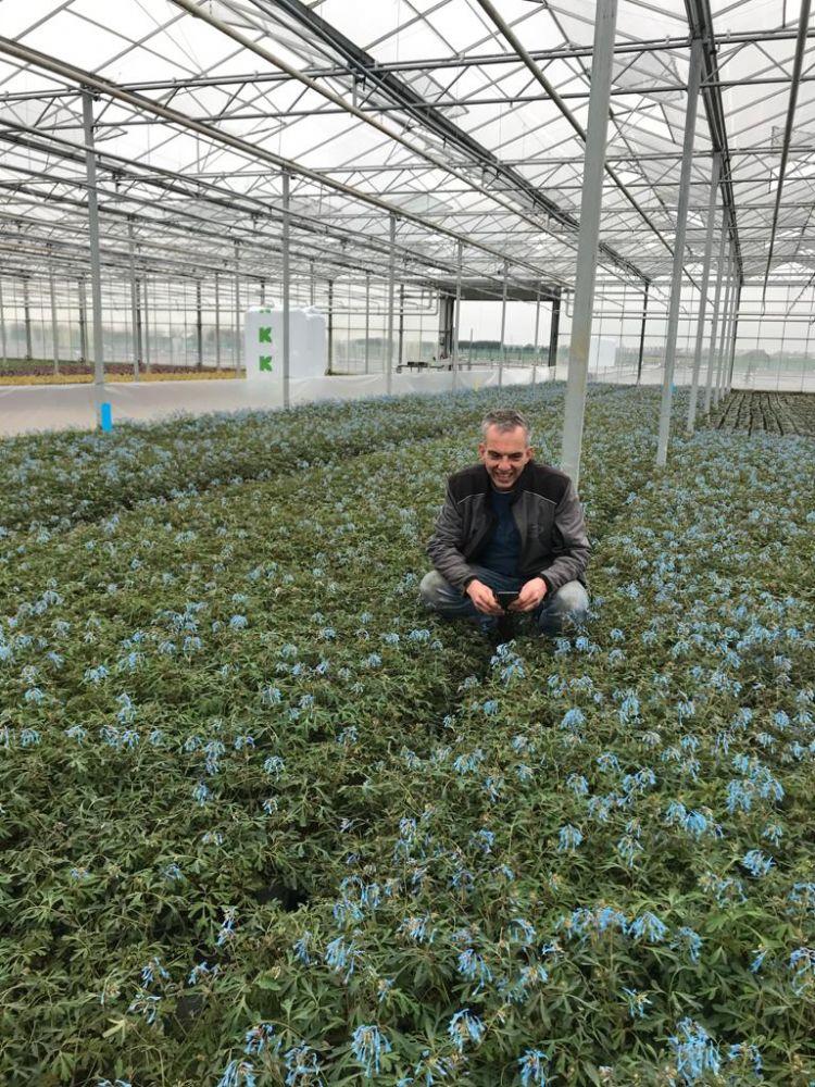 Van Woudenberg Tuinplanten