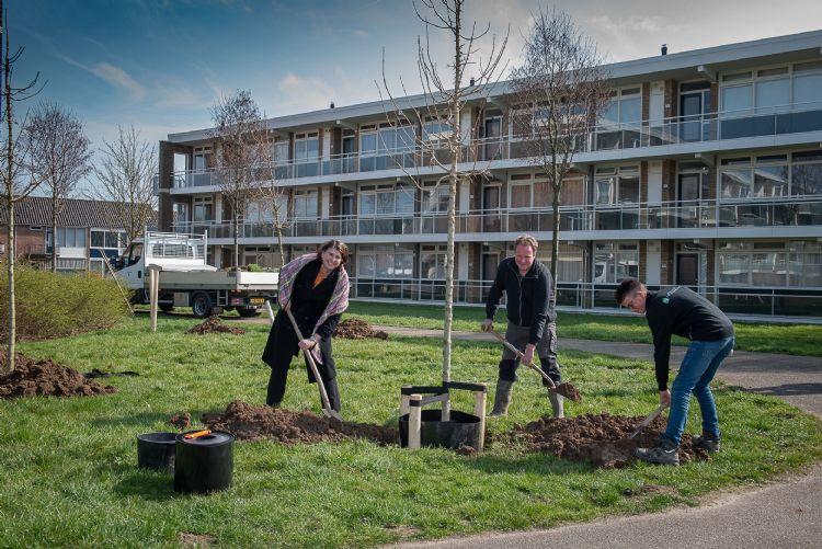 Wethouder Brigitte Faber en vader en zoon Ruijgrok planten veldesdoorn. Foto: Gemeente Overbetuwe