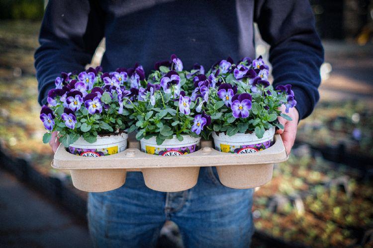 D-Grade Fibre trays van Desch Plantpak