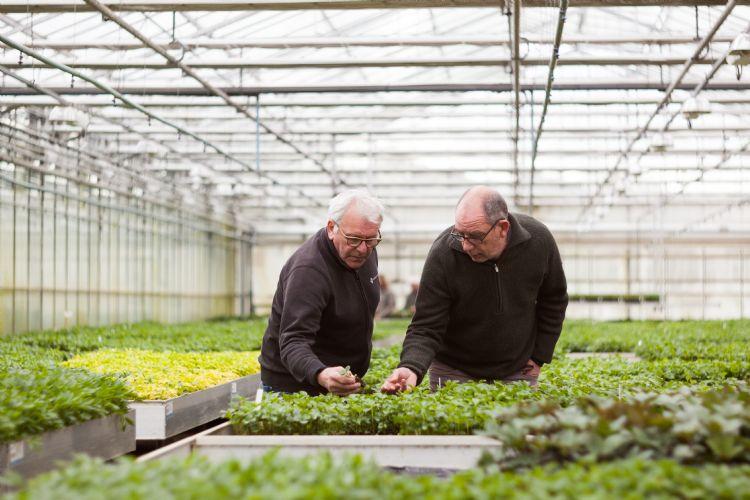Helleborus-kweker Thierry Van Paemel (l) en Wim Torfs van Jiffy bekijken de plantjes in de Preforma-plug