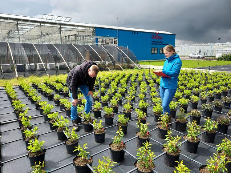 Bij Onderzoekskwekerij Boomteelt en Vasteplantenteelt in Hazerswoude. Foto: Delphy