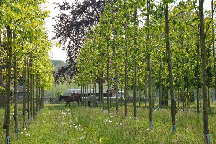 Skal-perceel bij Van den Berk boomkwekerijen