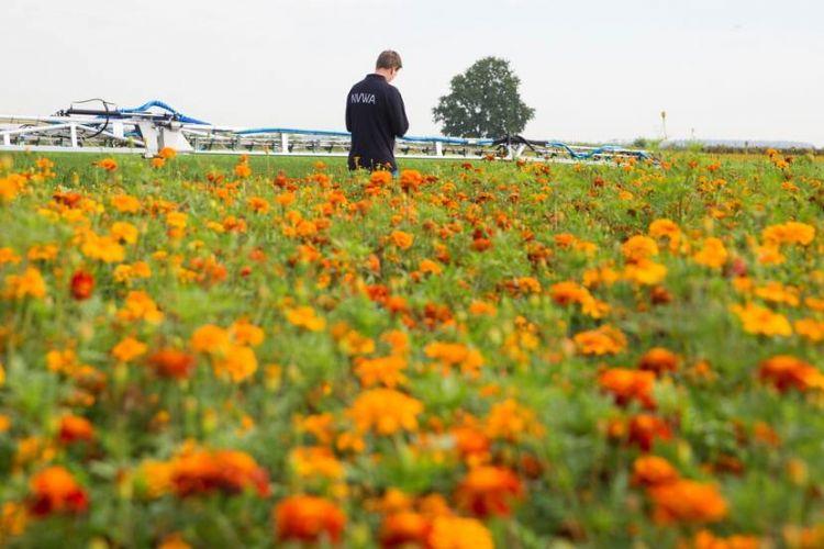 De NVWA constateert dat steeds meer bedrijven de regels voor het gebruik van bestrijdingsmiddelen in grondwaterbeschermingsgebieden netjes opvolgen. (Foto: NVWA)